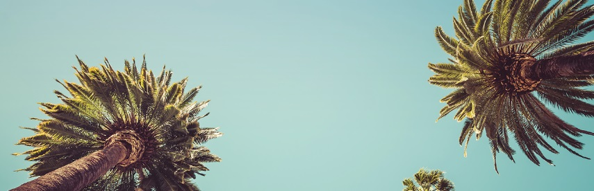 Palmiers vus du dessous