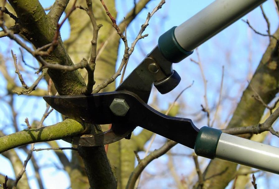 Sécateur qui coupe une branche
