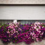 Un volet roulet vu d'extérieur avec des fleurs